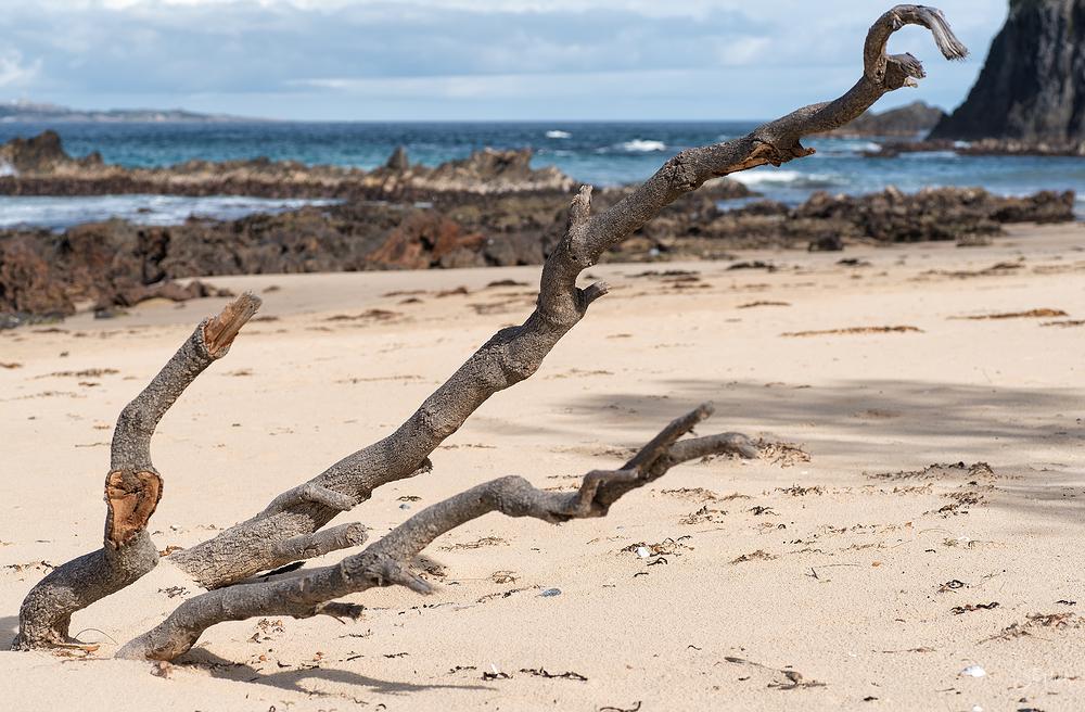 Driftwood at Glasshouse Rocks beach