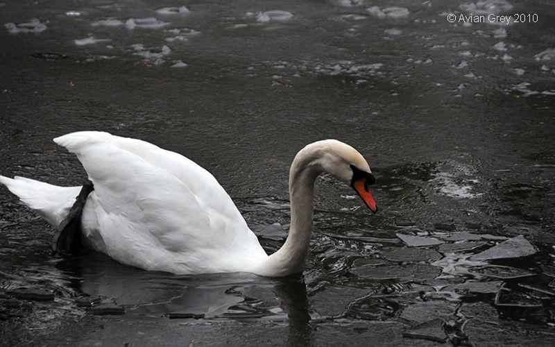 Walking Off Ice