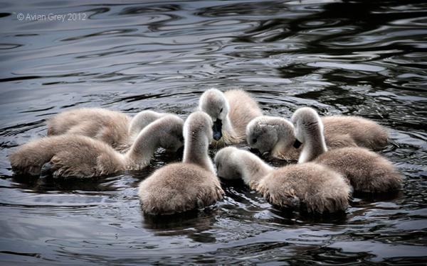 In A Huddle