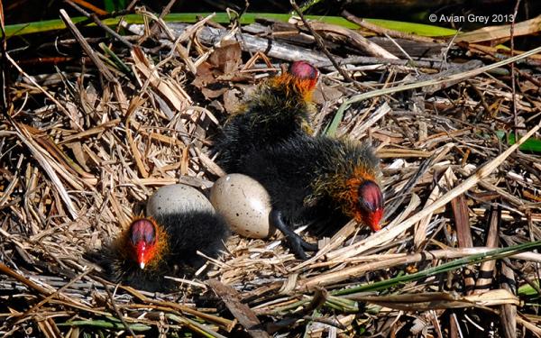 Hatchlings !