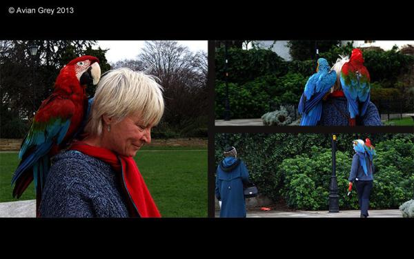 Walking the Parrots
