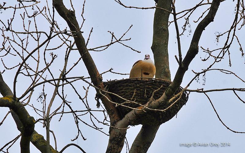 Quality Nest