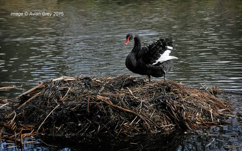 Mega-Nest