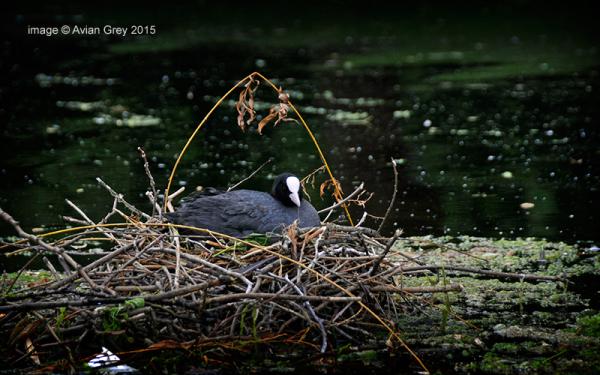 A Rather Regal Nest