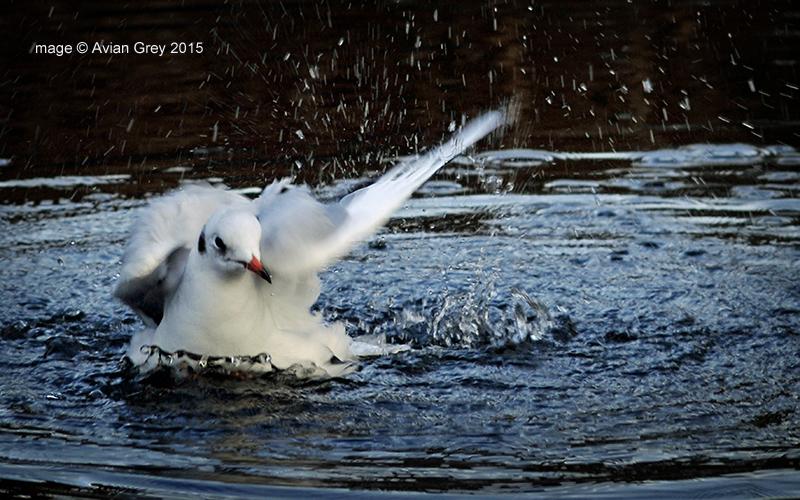 Splash Landing 1