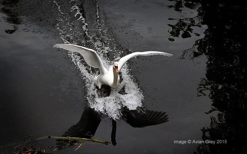 Splash Landing 2