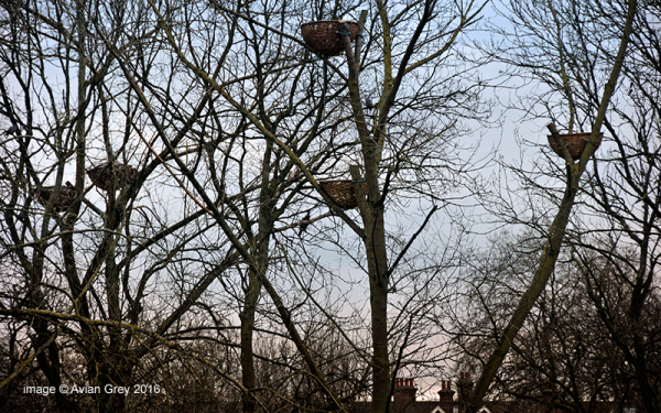Basket Nests