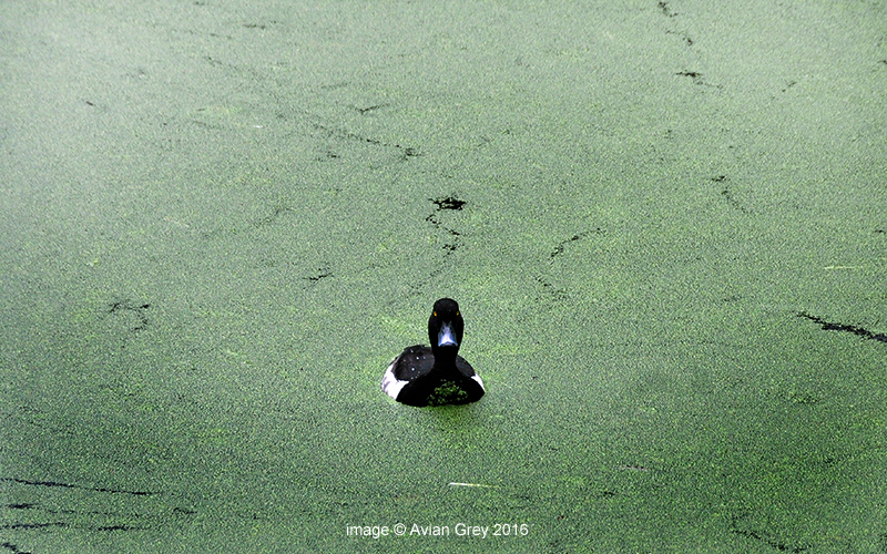 An Algae World . .