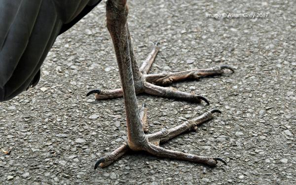 Familiar Feet