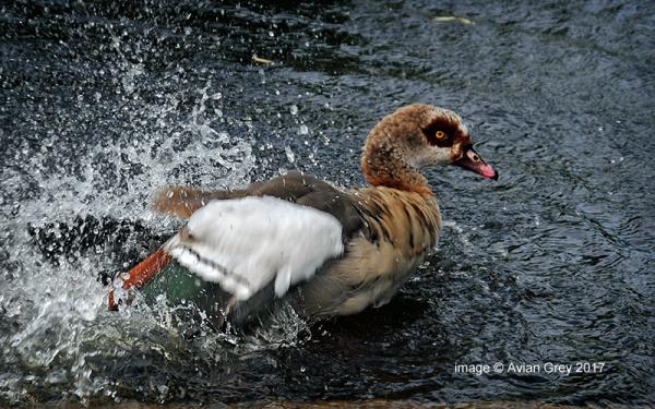 Splash . .