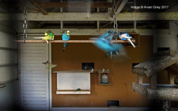 Aviary