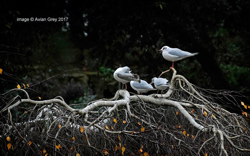Gulls Aloft