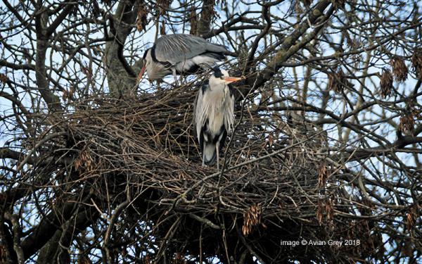 Nesting . .
