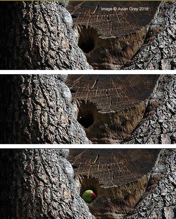 1,2,3,Parakeet