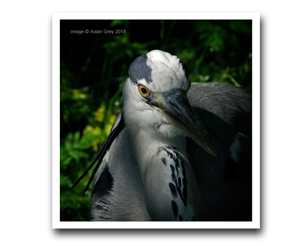 Heron Study  1