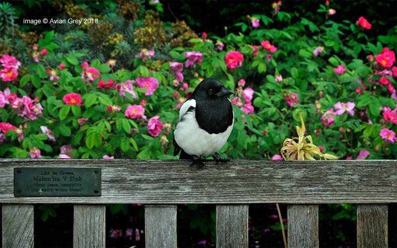 Monday Magpie