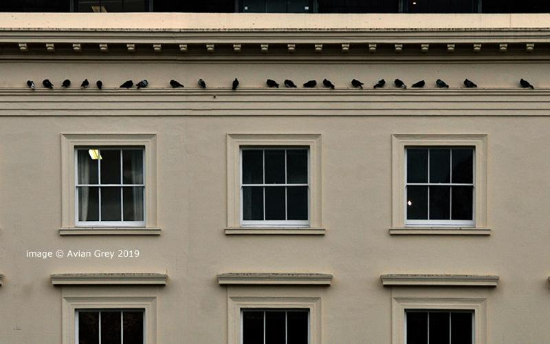 High Class Pigeons