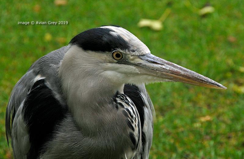 Long-Beak 2
