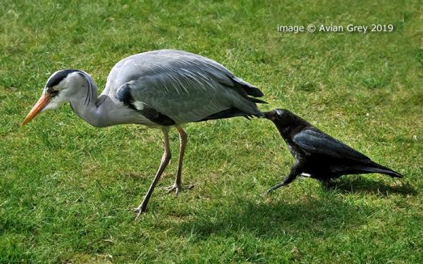 Peck !