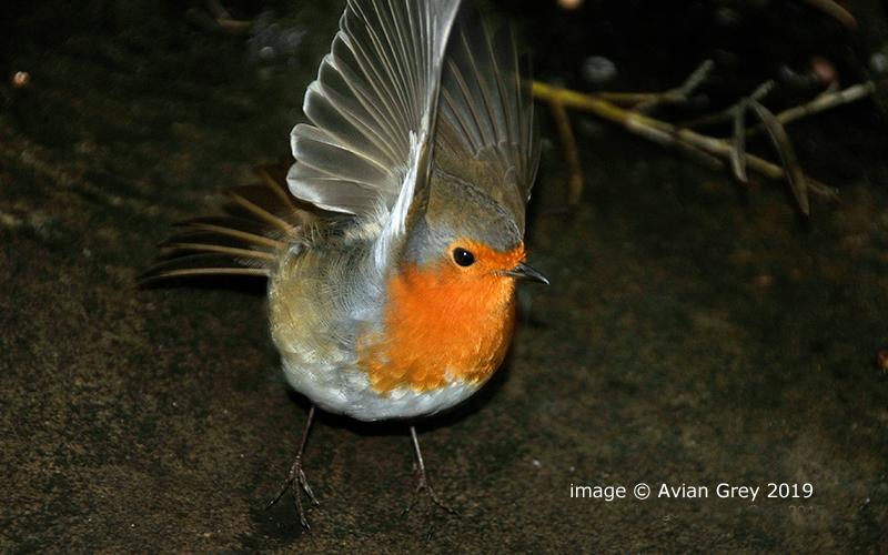 Robin Moment