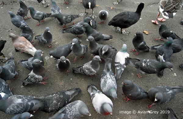 Crowded . .