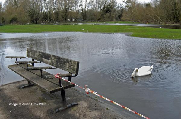 New 'Lake' ?!