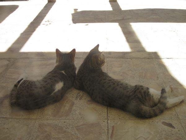 دو برادر