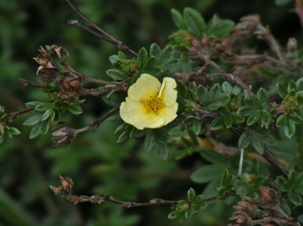 flower summer yellow blossom
