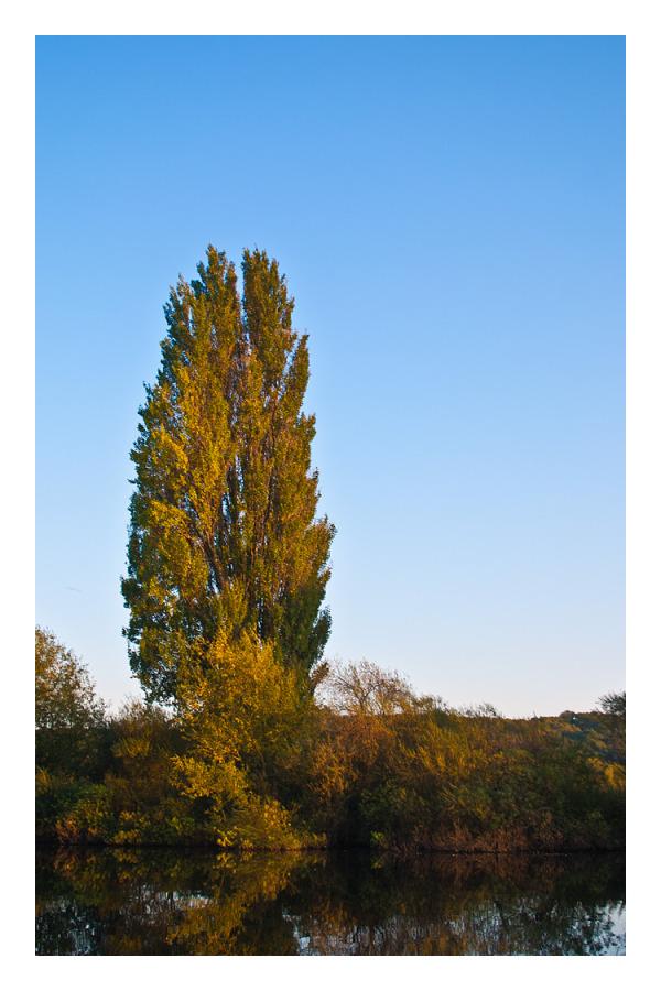 River Bank Tree