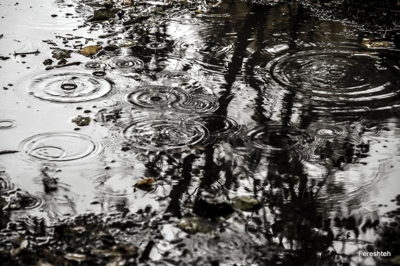 Fall & Rain  ,llll