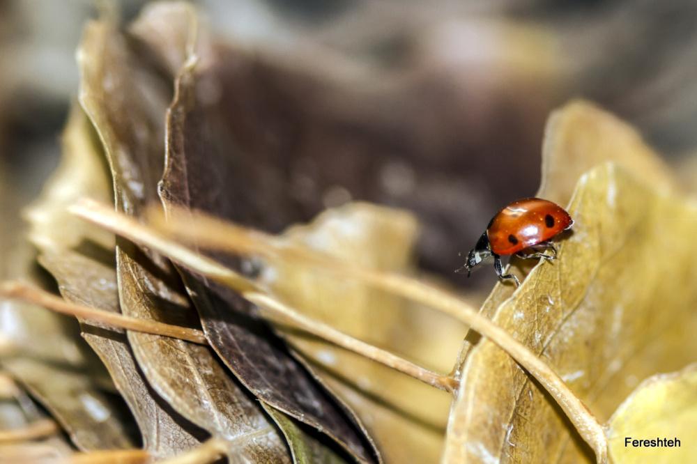Autumn & Ladybirds