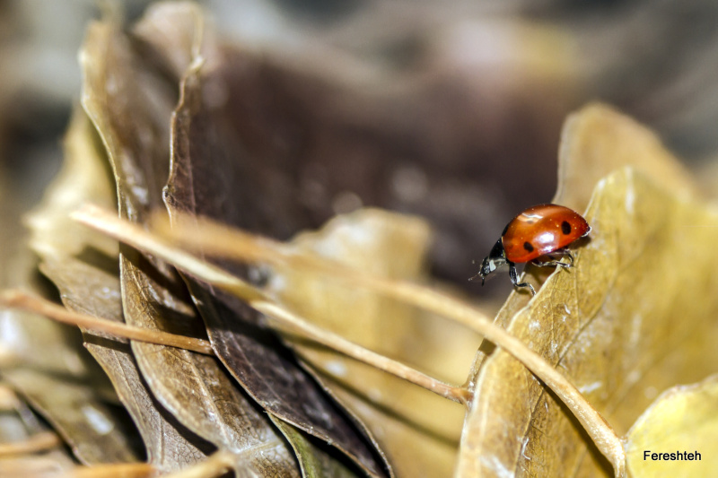 Autumn & Ladybirds