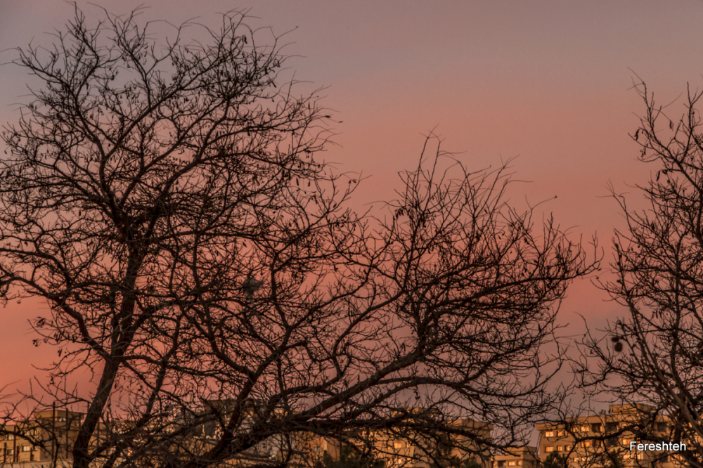 Sunset & Me  llll