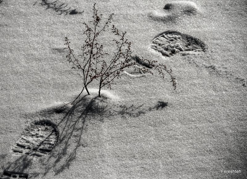 Snow & Me