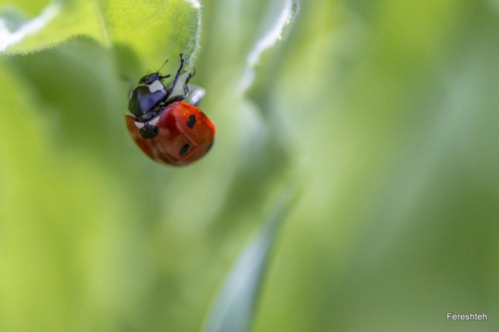 Spring & Ladybirds  ll