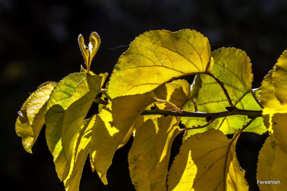 Autumn Whispers lllllll,4