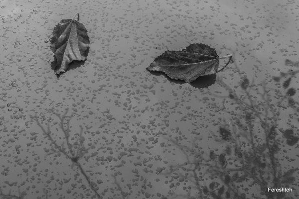 Autumn ll