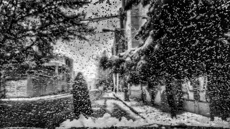 A snow day llll