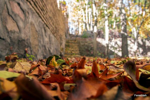 Autumn Whisper ll
