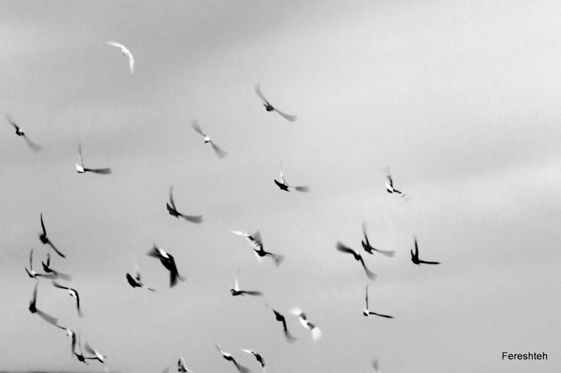 Flying ...