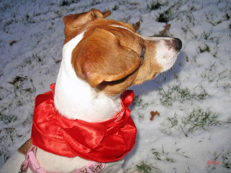 A cheery red shawl