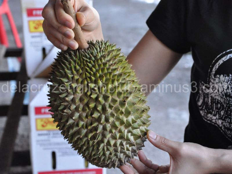 durian, king of fruit, Durio kutejensis