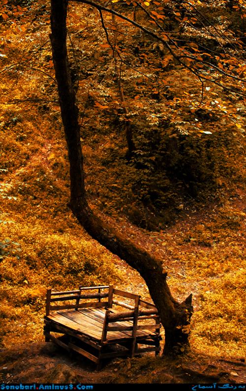 autumn پاییز
