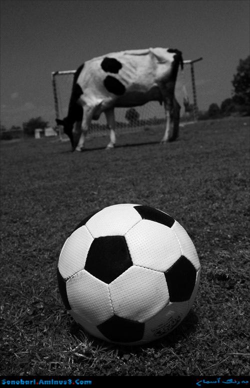 Animals Football.