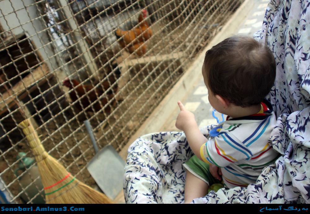 hen child