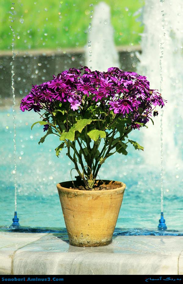 گلدان بهار
