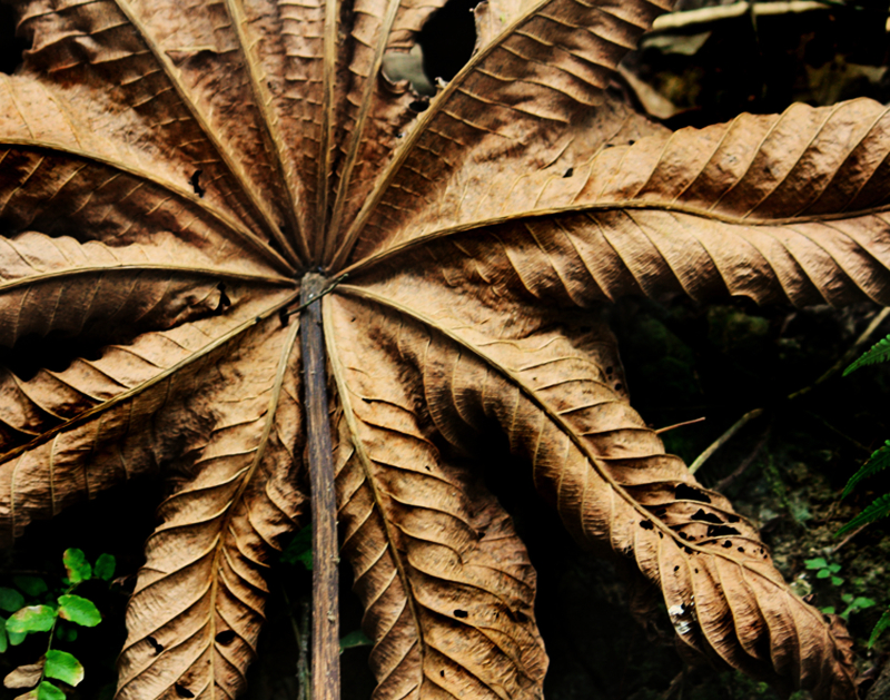 RAINFOREST CANOPY LEAF