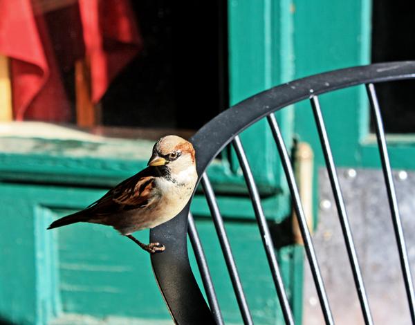 A BIRD COMES TO VISIT - BISBEE AZ