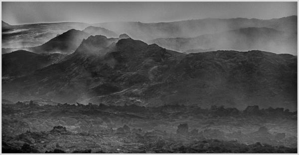Steam Forest