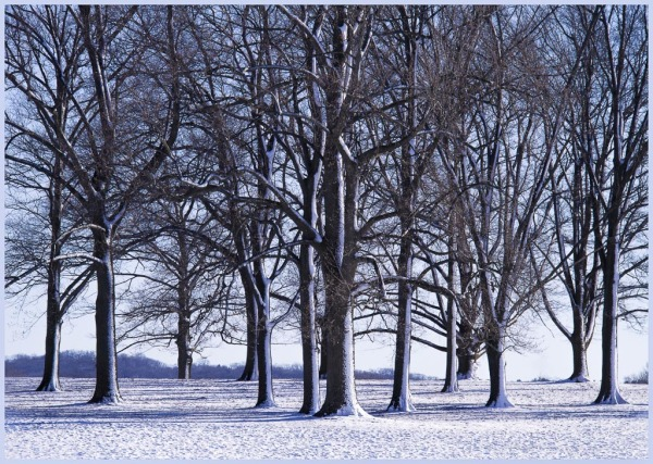 Valley Forge, trees, snow